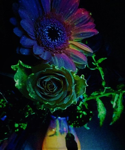 """If you change the way you look at things, the things you look at change."" - This picture represents both the elemental things in life (plants that produce the air we need to breathe) and the elements of life (carbon, oxygen and hydrogen included in the structure of fluorescein, the fluorescent dye I added when watering the plants). The flowers are illuminated with UV-light to show that Medicinal Chemists need to look at pharmacological pathways from a variety of perspectives."