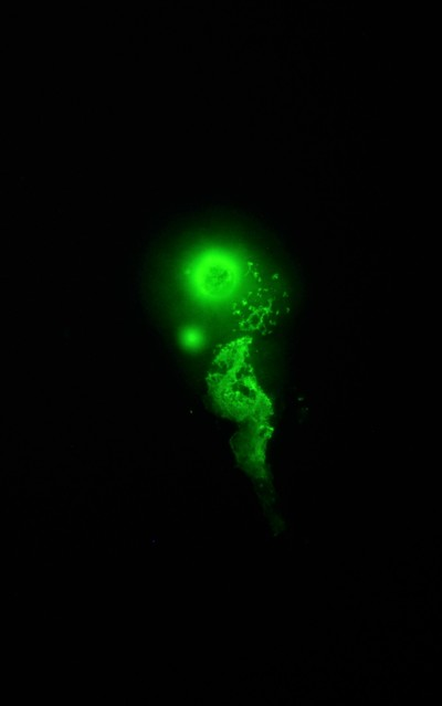 Microscope photography.
