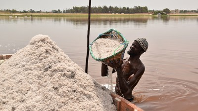 Salt is an essential element of life. We all need it and for some people it generates their daily income as they are harvesting the salt. At Lac Rosé in Senegal, salt is daily harvested from the bottom of the lake by the local people, like the man in this picture. The salt is collected in small wooden boats, shipped to the beach of the lake, carried in baskets from the boat to salt hills at the beach by women and then dried in the sun. It is hard work in heat of the sun and the salty waters of Lac Rosé that turns red when the sun is shining. I withnessed the salt harvest and I have deep respect for all those hard working local people that supply salt as the essentical element of life.